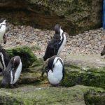 Penguin Bay