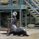 Sea Lion Bay